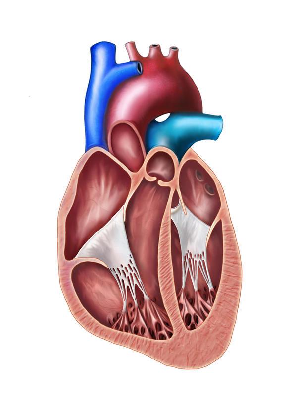 winstrol heart attack