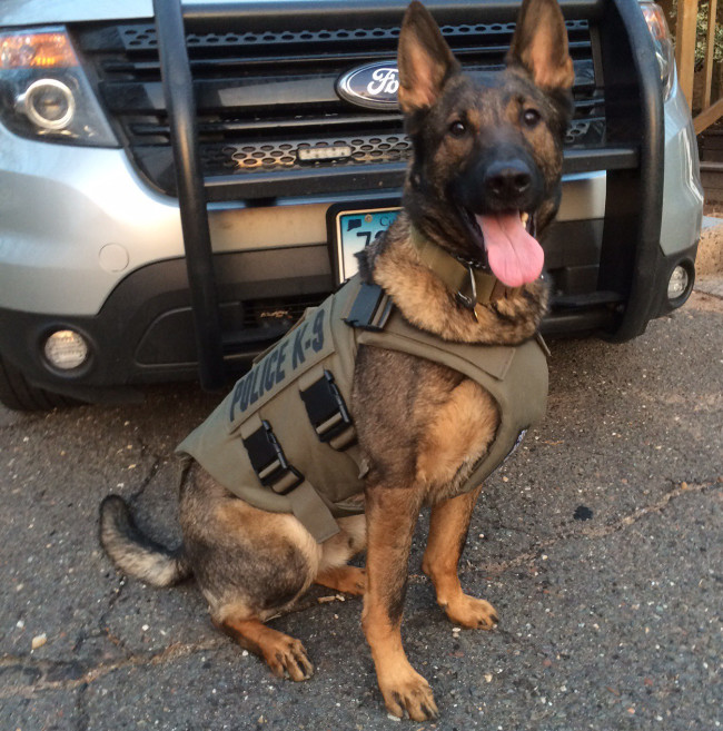 Police Drug Dogs Really are Specifically Trained to Detect Anabolic Steroids