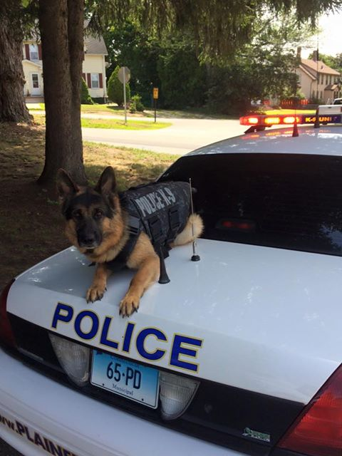 Can police drug dogs really detect anabolic steroids?