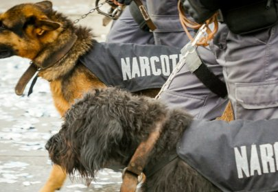 Sniffer Dogs are Apparently the Next Frontier in Anti-Doping's Desperate Attempt to Catch Steroid Users